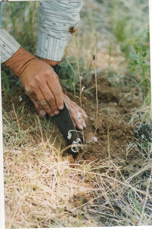 Cheyenne Trail Ride 1998 3