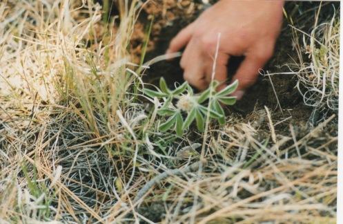 Cheyenne Trail Ride 1998 9